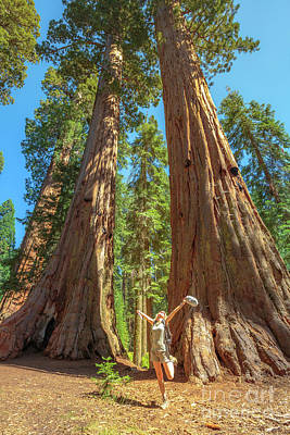 Photograph - Traveler Woman In Sequoia Park by Benny Marty