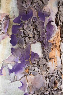Fine Dining - Tree Bark Pattern #3 by Robert VanDerWal