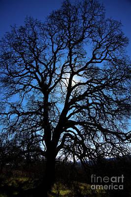 Photograph - Tree by Derek Selander