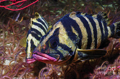 World Schooling Photograph - Tree Fish by Greg Amptman