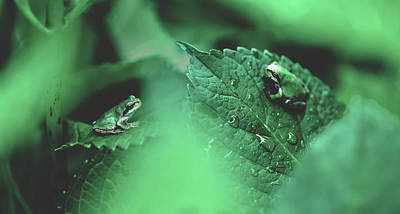 Photograph - Tree Frogs by Pixabay