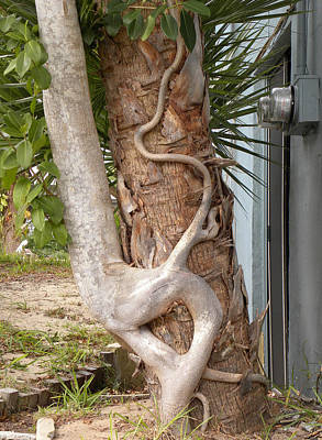 Photograph - Tree Hugger by Richard Barone