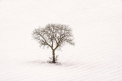 Snow Covered Fields Photograph - Tree Isolated In Winter. Auvergne. France by Bernard Jaubert