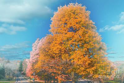 Photograph - Tree Line by William Norton