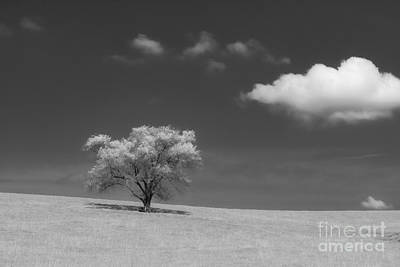 Photograph - Tree by Lisa Plymell