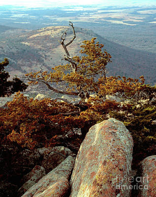 Photograph - Tree On Mt. Scott by Richard Smith