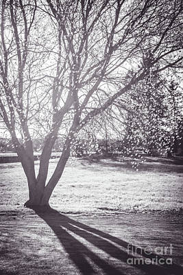 Photograph - Tree Shadows by Cheryl Baxter