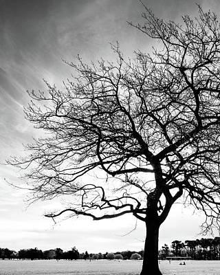 Photograph - Tree Silhouette by Roseanne Jones