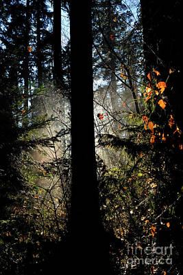 Photograph - Tree Silhouette  by Terry Elniski