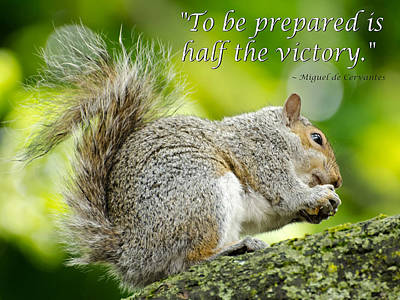 Squirrel Photograph - Tree Squirrel by Ellen Henneke