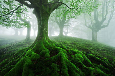 Tree Root Photograph - Land Of Roots by Mikel Martinez de Osaba