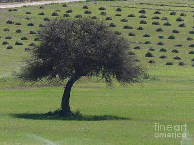 Photograph - Treeline by Brian Boyle