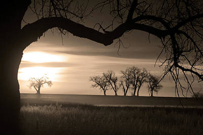 Sepia Photograph - Trees And Meadows Sunrise In Black And White Photo Image  by James BO  Insogna