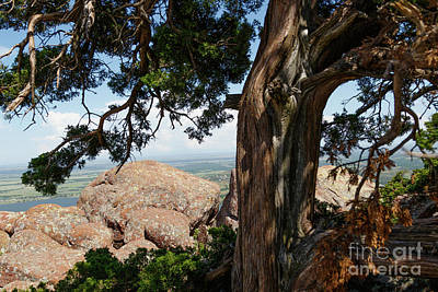 Photograph - Trees At The Top by Richard Smith
