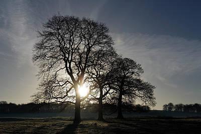 Photograph - Trees by David Harding