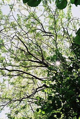 Trees In Bloom 3 Art Print by Anton Popov