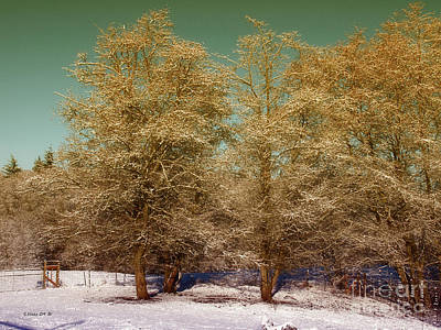 Photograph - Trees In Oregon Winter by Shari Nees