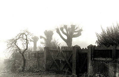 Nirvana - Trees in the Fog by Nancy Mueller