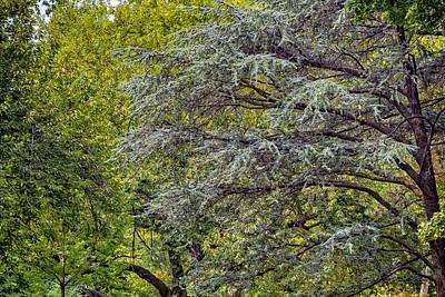 Albert Bierstadt - Trees by Robert Ullmann