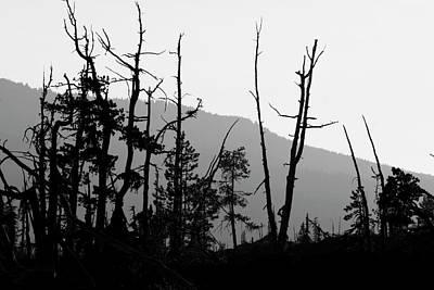 Photograph - Trees Silhouettes by Yulia Kazansky