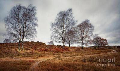 Autumn Landscape Mixed Media - Trees by Svetlana Sewell