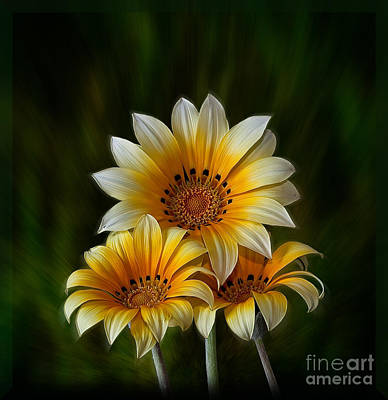 Photograph - Triple Sunshine by Shirley Mangini