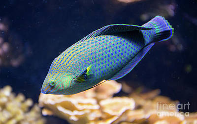 Photograph - Tropical Fish by Kevin McCarthy