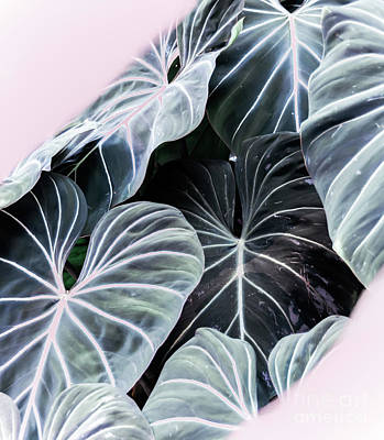 Photograph - Tropical Foliage by Andrea Anderegg