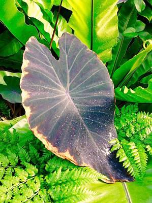 Photograph - Tropical Garden by Mindy Newman