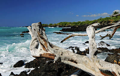 Photograph - Tropical Paradise  by Mary Haber