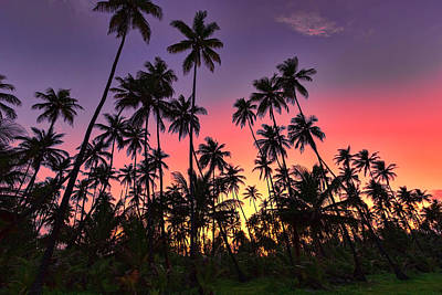 Photograph - Tropical Sunset by Nadia Sanowar