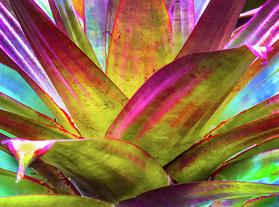 Tropicana Art Print by Karen Wiles