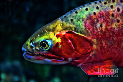 Photograph - Trout by Steven Parker