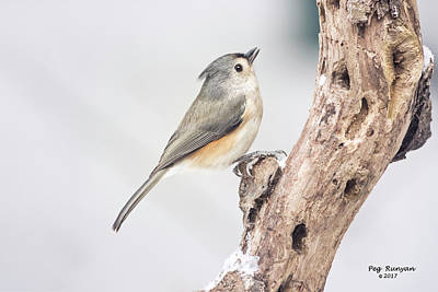 Photograph - Tufted Titmouse by Peg Runyan