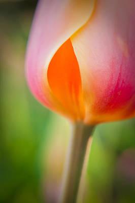 Photograph - Tulip-2 by Joye Ardyn Durham
