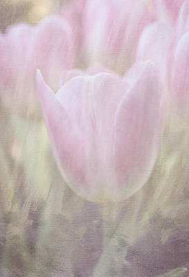 Photograph - Tulip Dream by Arlene Carmel