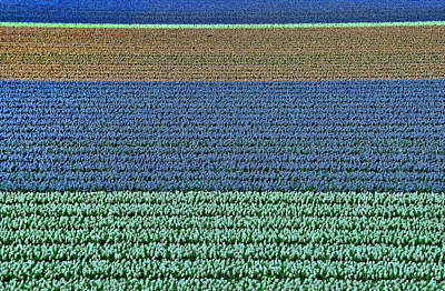Photograph - Amsterdam Tulip Field 2 by Allen Beatty