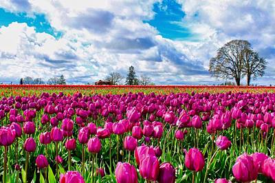 Photograph - Tulip Field by Brian Eberly