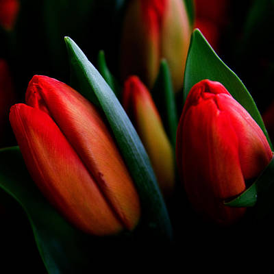 Photograph - Tulip Patch by David Patterson