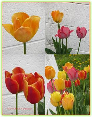Buy Tulips Photograph - Tulip Time by Sonali Gangane