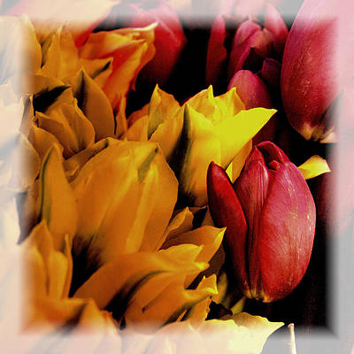 Tulips  Art Print by David Patterson