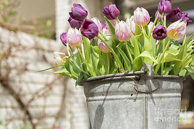 Photograph - Tulips In A Bucket by Patricia Hofmeester