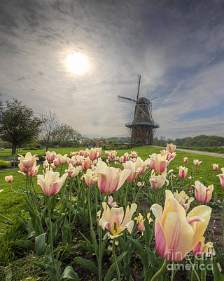 Wind Photograph - Tulips In Holland by Twenty Two North Photography