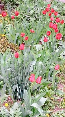 Photograph - Tulips by Oleg Zavarzin
