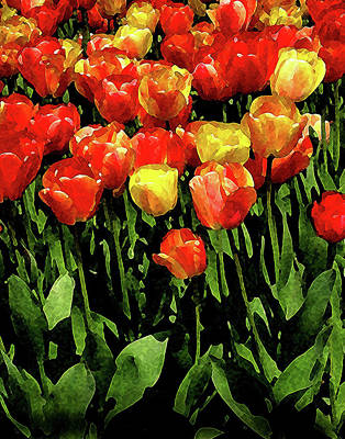 Digital Art - Tulips by Timothy Bulone