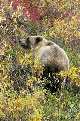 Photograph - Tundra Grizzly by Frank Townsley
