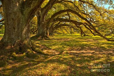 Photograph - Tunnel Of The Oaks by Adam Jewell