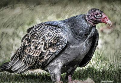Turkey Mixed Media - Turkey Vulture  by Reese Lewis