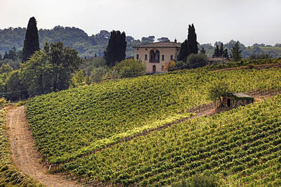 Vineyard Photograph - Tuscany by Joana Kruse