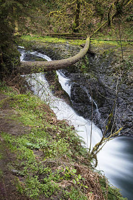 Photograph - Twin Falls In Silver Falls State Park by John McGraw